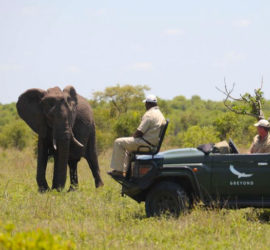 Phinda-elephant